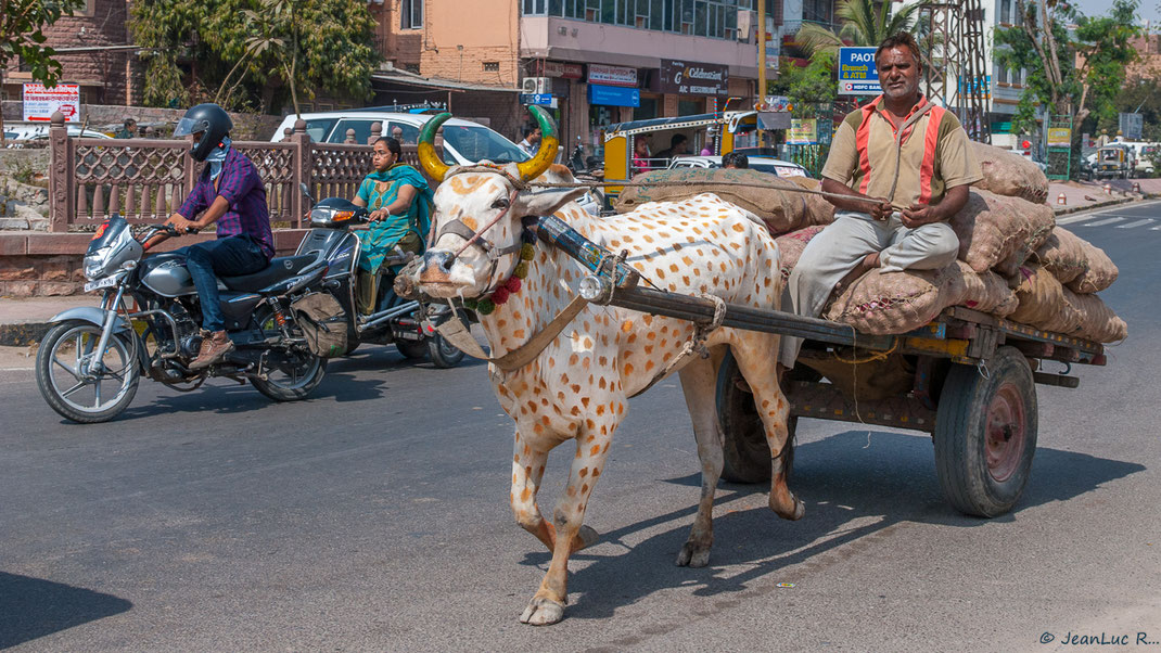 De l'exotisme dans une avenue de Jodhpur (Rajasthan).