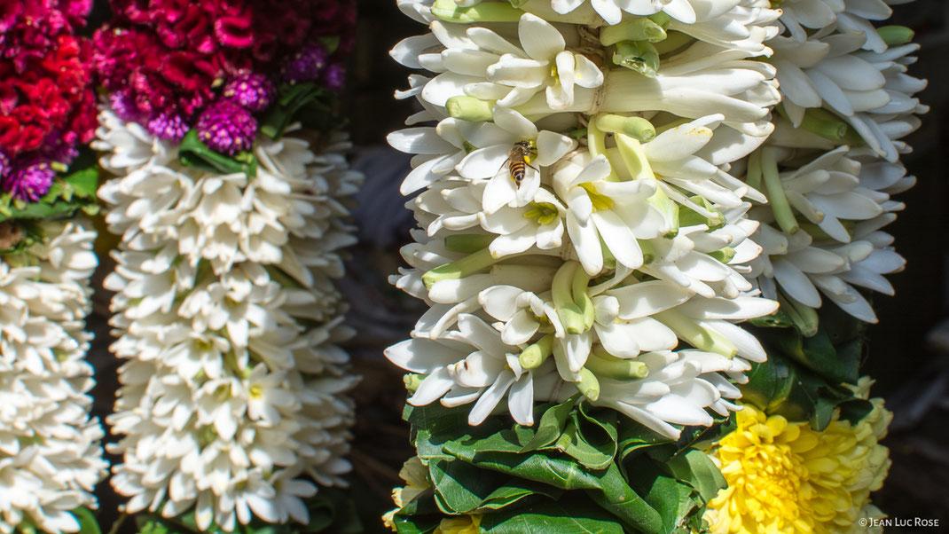 Fleurs de jasmin.
