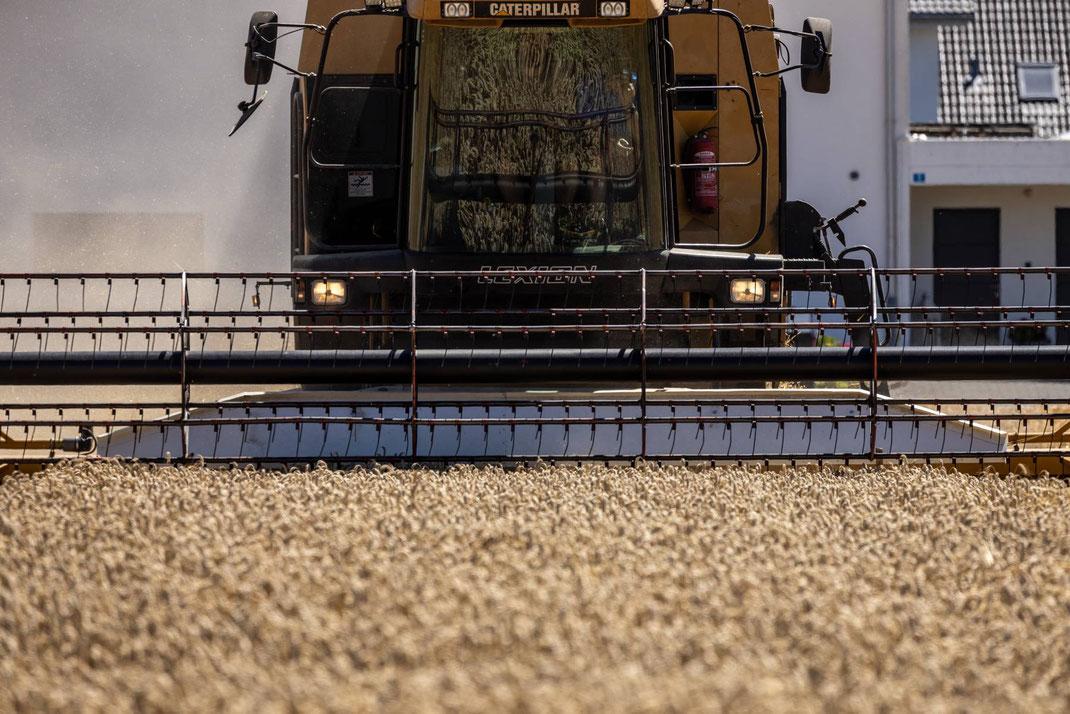 Modernste Erntemaschine bei sommerlicher Weizenernte angrenzend an ein Wohnquartier in Alberswil.