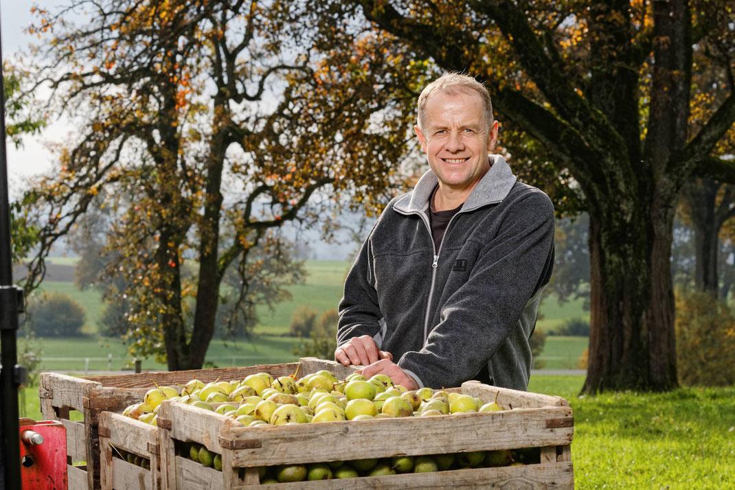 Mostbirnen-Ernte bei Landwirt Josef Dober, Oberhocken Rothenburg/LU. Die reifen Birnen werden am Boden eingesammelt und zur Mosterei Schürch geliefert.