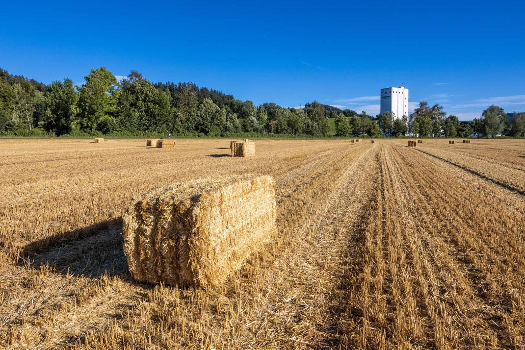 Ein Weizenfeld unmittelbar nach der Ernte: Das Getreide lagert bereits in den rieisigen Silotürmen der Weibel & Co. AG im Hintergrund. Die Strohballen warten auf den Abtransport.