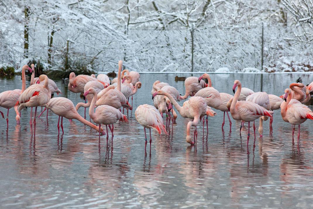Dezemberbild 2022 im Kalender vom Tierpark Dälhölzli Zoo Bern