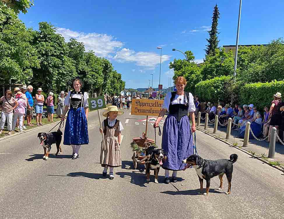 Appenzeller Sennenhunde an Festumzügen