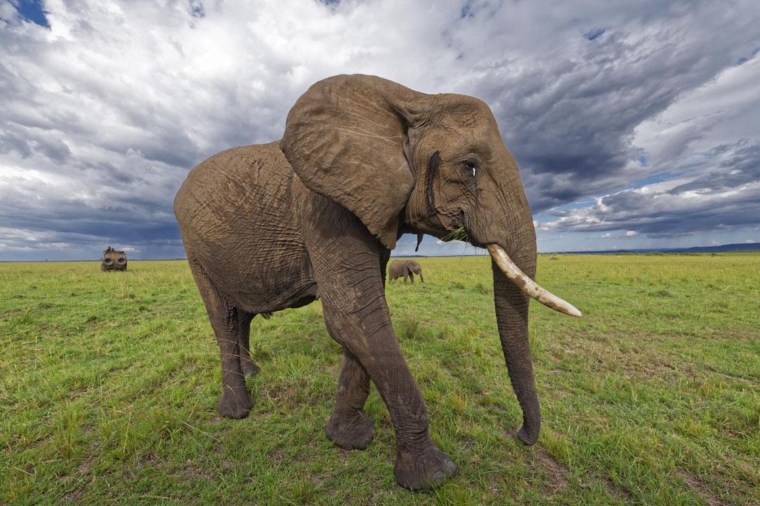 Elefanten, elephants, Masai Mara, Kenia, Fotosafari, Nikon, D850