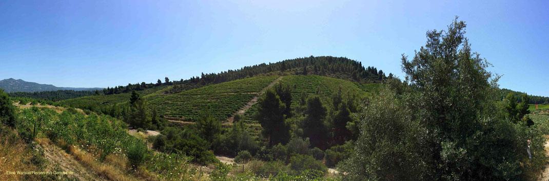 Weingut griechischer Wein Porto Carras Sithonia Ellen Warstat