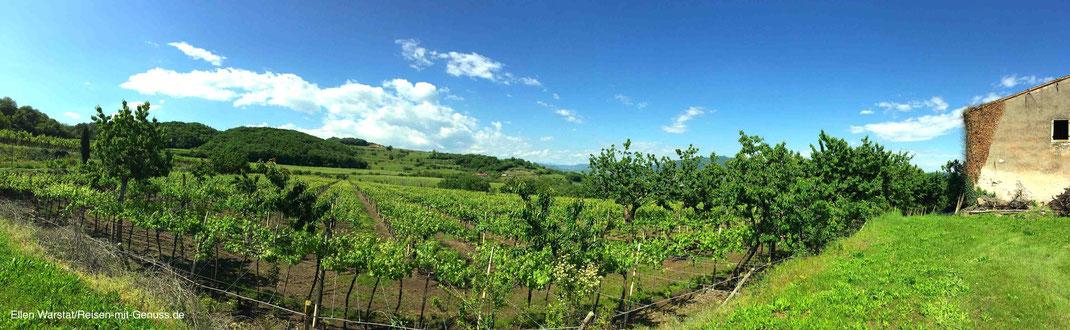 Soave Italien Wein Weingut Corte Adami Ellen Warstat