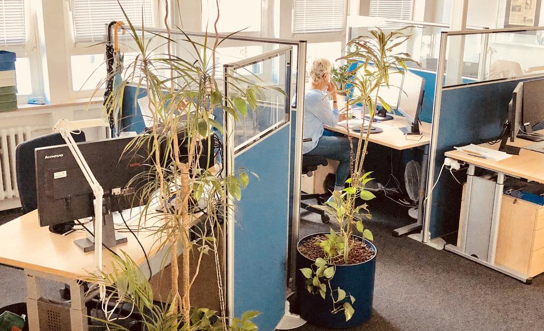 Büroraum mit Pflanzen
