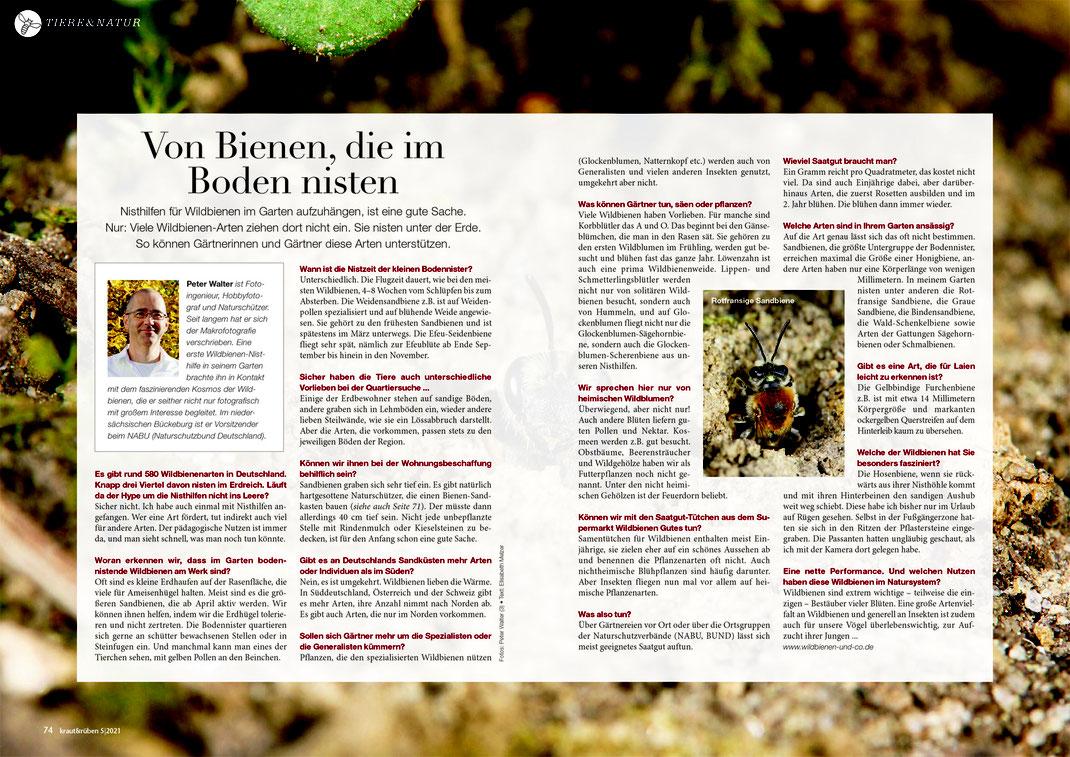 Eine Doppelseite über Sandbienen & Co. in der Mai-Ausgabe von kraut&rüben - unbezahlte Werbung !