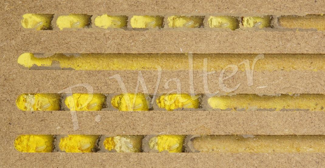 Bild: Nistkammern der Rostroten Mauerbiene, Osmia bicornis, in dem Beobachtungsnutbrett mit 6mm Gangdurchmesser, Pollen, Eier, Trennwände
