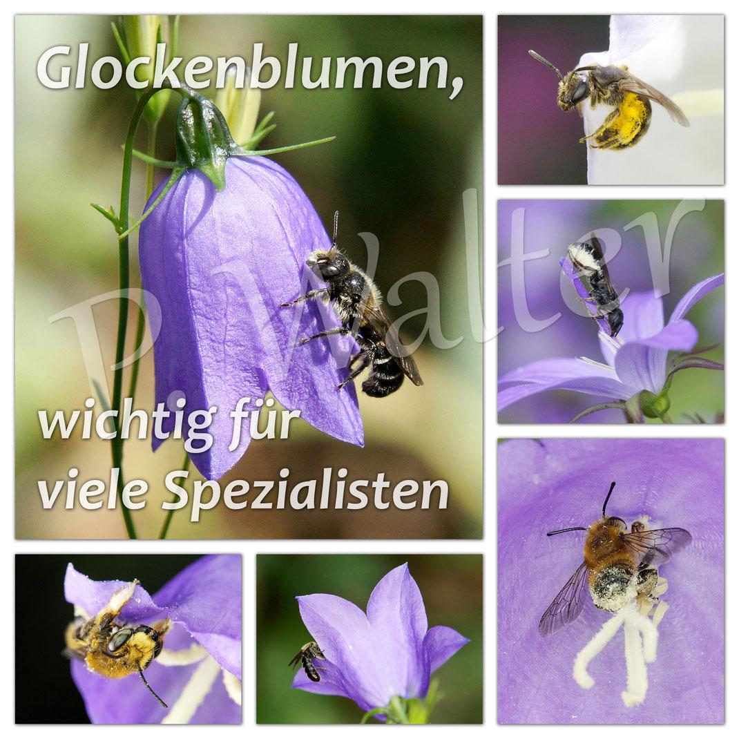 ... eine kleine Übersicht der Besucher von Glockenblumen ...