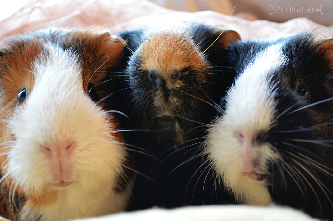 Pixxi, Grimmel and Piggy