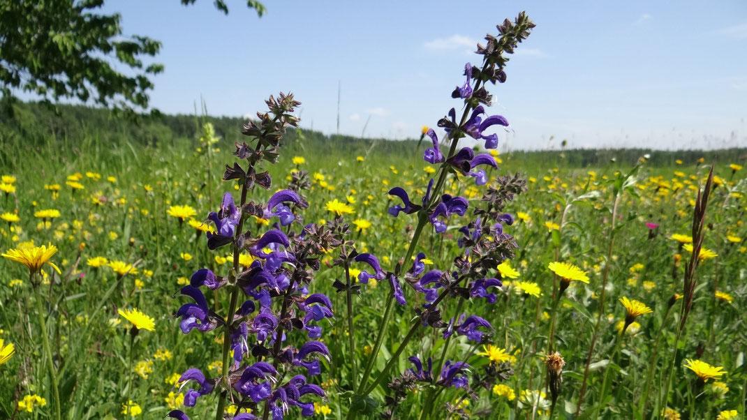 Die Natur im Landkreis ist wunderschön und schützenswert. Viele Tier- und Pflanzenarten finden hier ein Zuhause.  © Elke Tramp