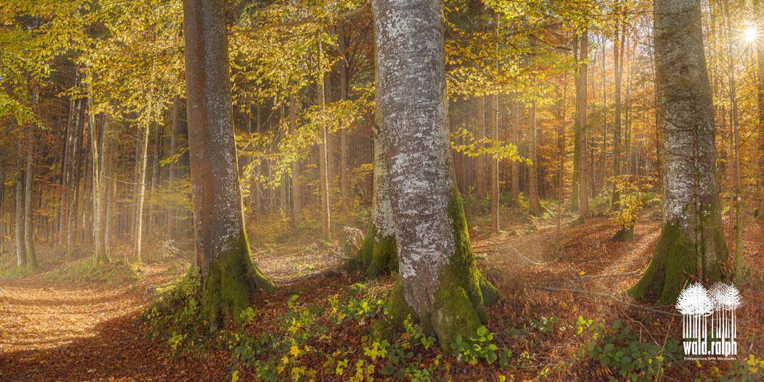Alle Personengruppen mit hoher körperlicher, mentaler und psychischer Anspannung profitieren vom Waldbaden! Wald-Ralph, Ralph Hatt, Attikon