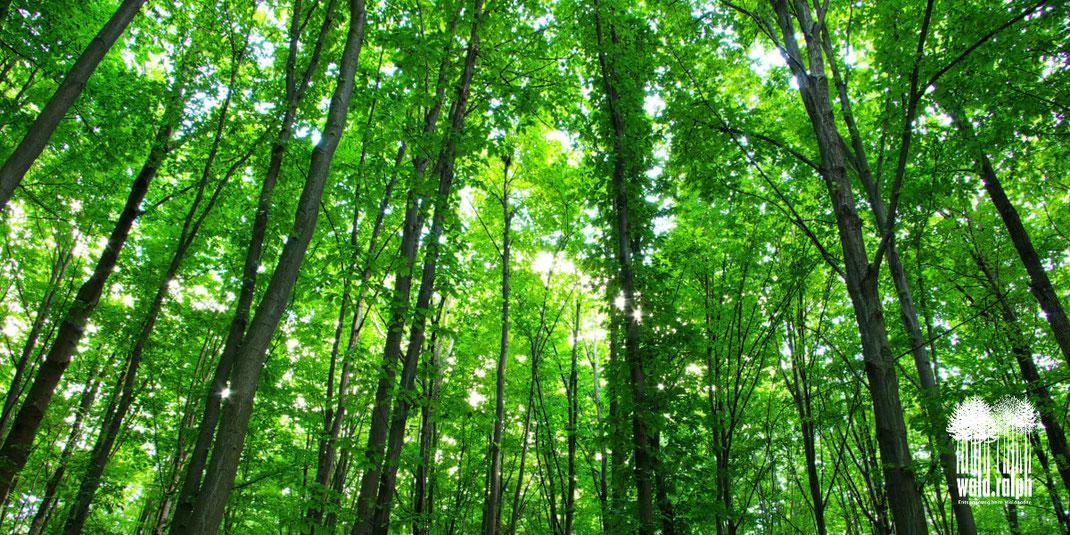 Ruhe im Wald. Was ist Waldbaden? Wald-Ralph, Ralph Hatt, Stress-Management-Methode