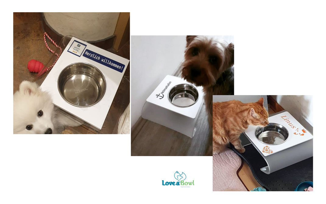 Wassernapf Futternapf Hund Katze
