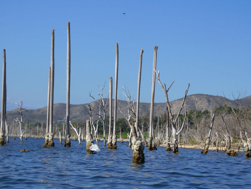 Dom Rep, Dominikanische Republik, Lago Enriquillo