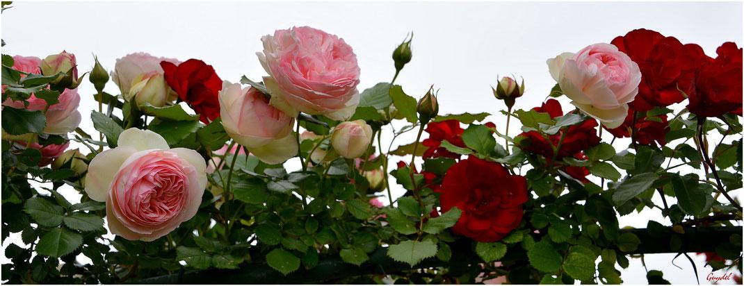 Juste quelques roses