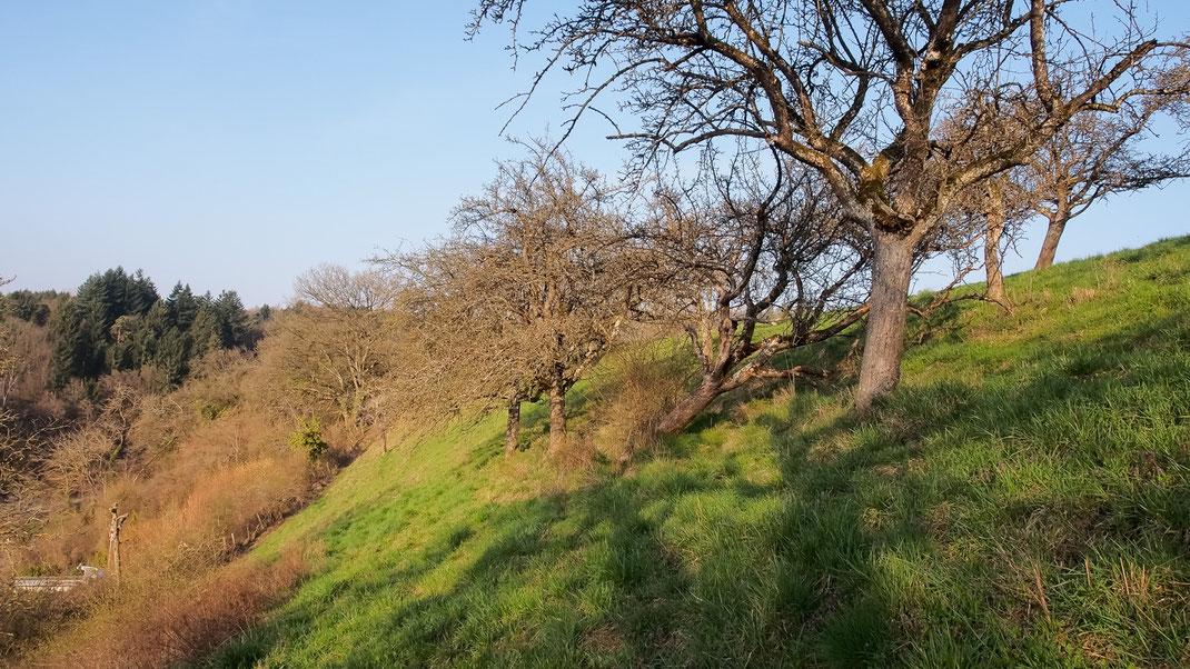 """Hochstamm-Obstbäume bei der """"Chlus"""", Schaffhausen (Foto: A. Reich)"""
