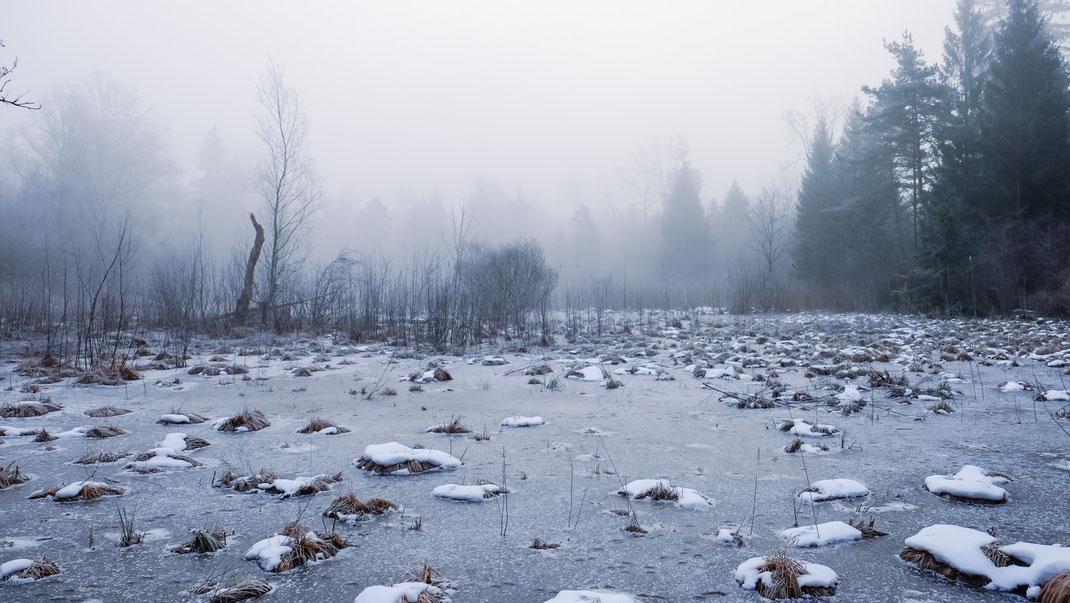 Mystik in der Winterstimmung im Eschenriet (Foto: A. Reich)