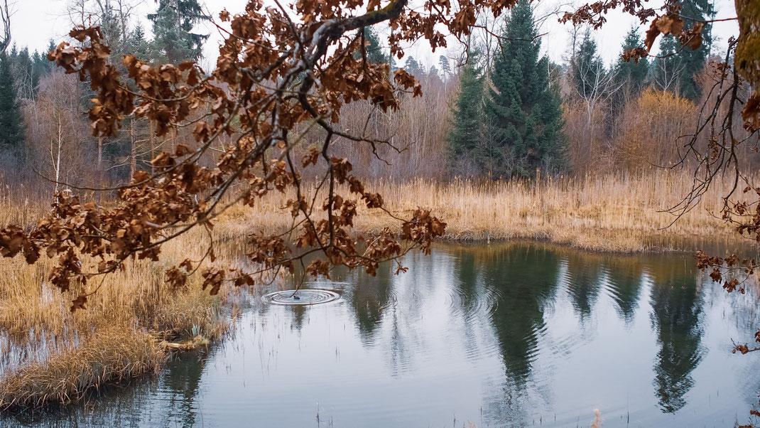 Idyll im Schaarenwald: das Eschenriet (Foto: A. Reich)