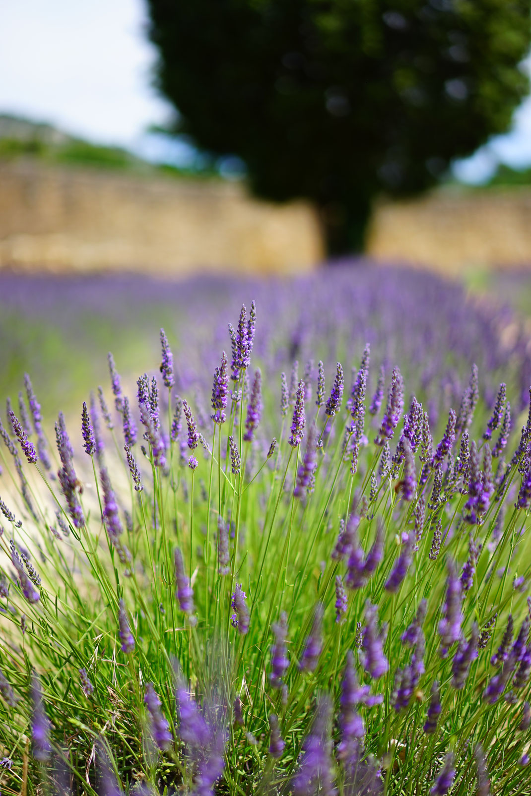 Gartenreise Provence - airtour.at