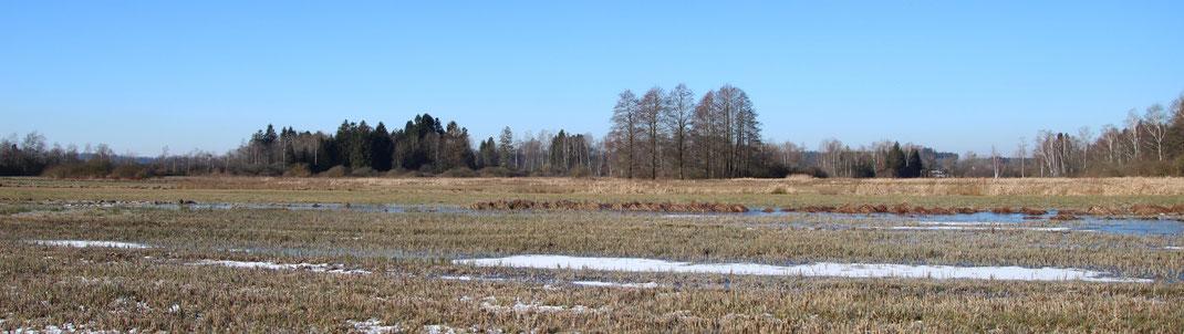 Obenhausen Ried Niedermoor Feuchtwiese Nasswiese Streuwiese Molinion Biotop Naturschutz LBV Neu-Ulm Buch