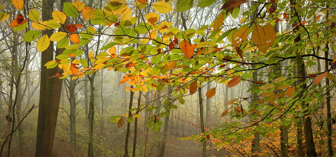 Mistig herfst bos