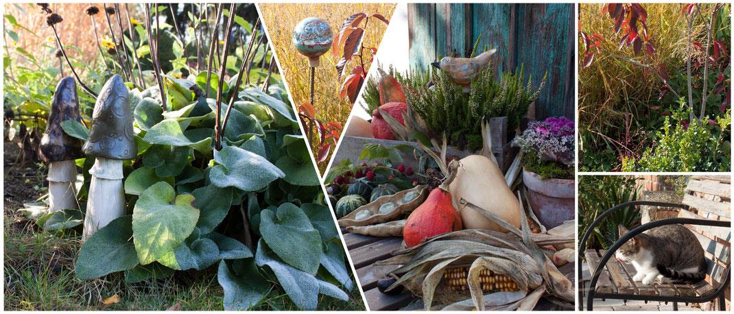 HERBST - Pilze Gräser und Kürbisse im Garten