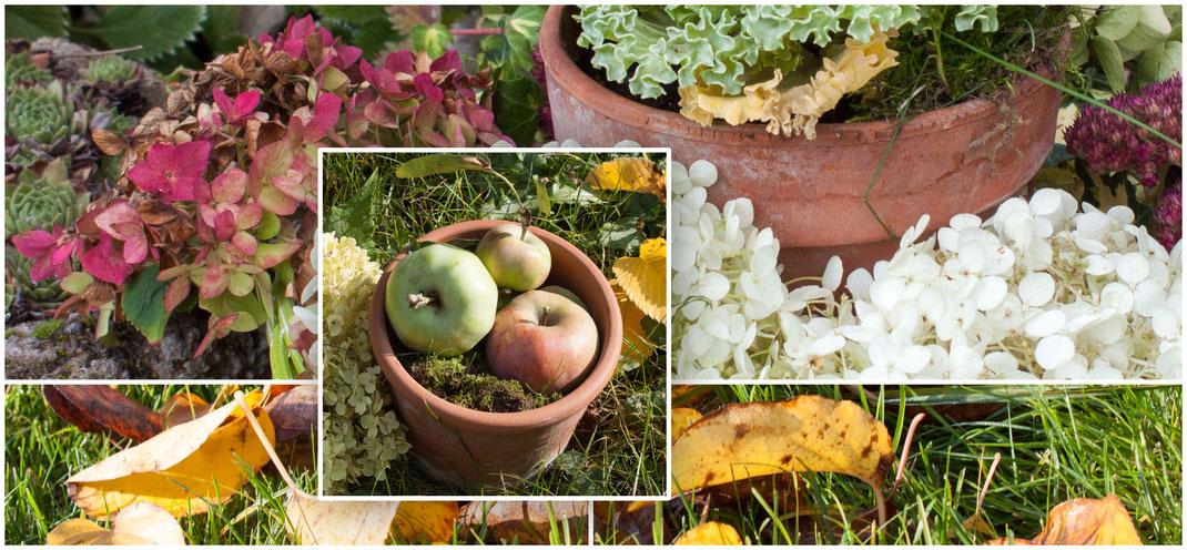 HERBST - bunte Blätter Äpfel und Hortensien