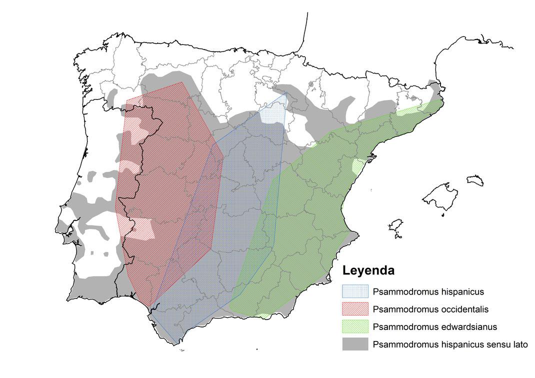 Distribución de Psammodromus hispanicus en la península Ibérica. En gris, distribución de Ps. hispanicus sensu lato y en trama, polígono mínimo convexo de las muestras secuenciadas de cada especie (San José et al., 2012). © V. Sancho 2015.
