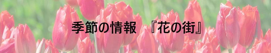 季節の情報 『花の街』