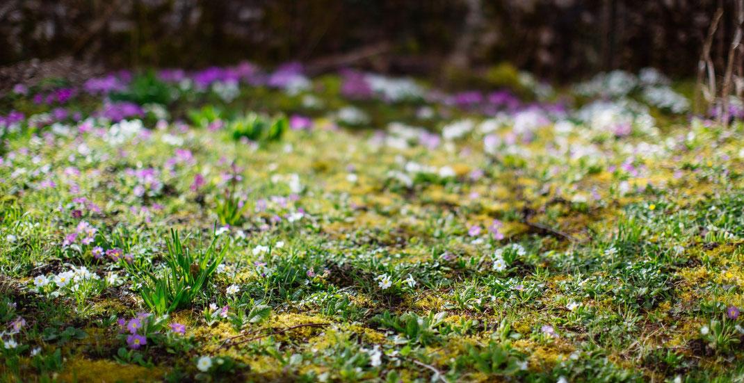 Photographe Jardin Paysagist Montfort l'Amaury, Yvelines