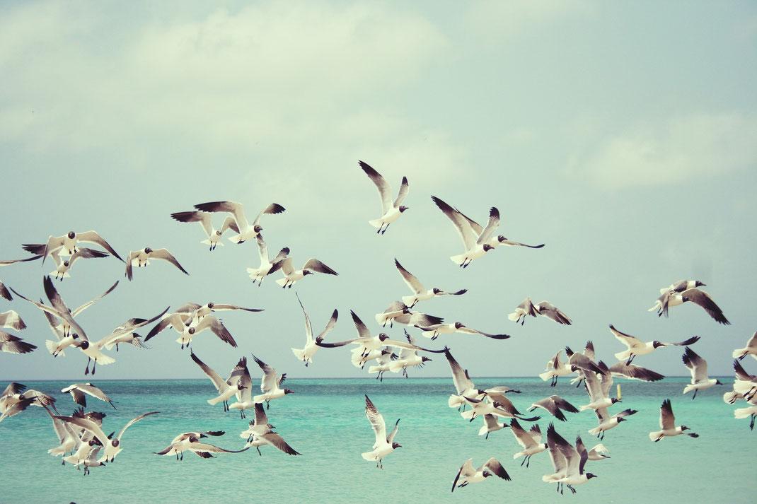 Psychologische Beratung Bild Meer Vögel
