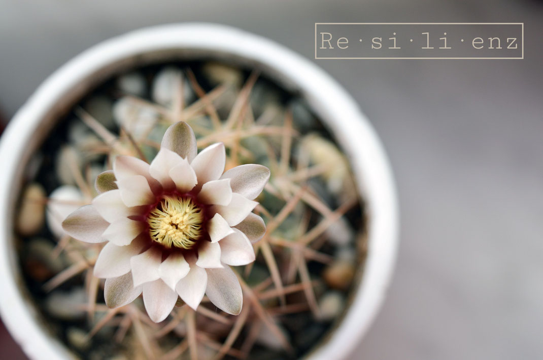 Resilienz | Bild Kaktus
