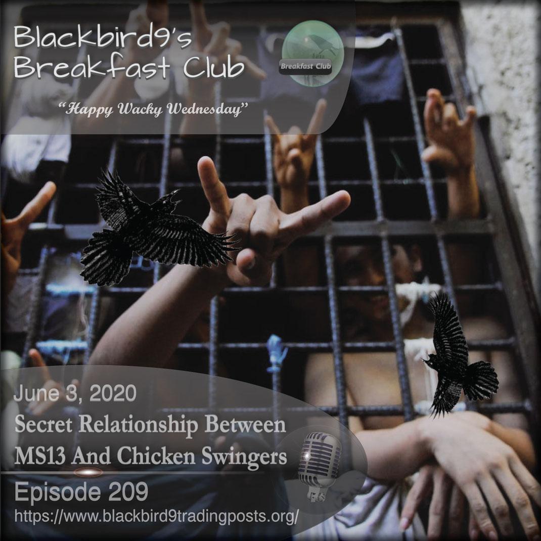 Secret Relationship Between MS13 And Chicken Swingers - Blackbird9