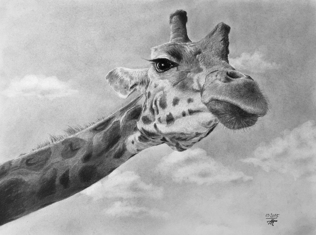 Girafe rêvant des Seychelles...(intraduisible en anglais)