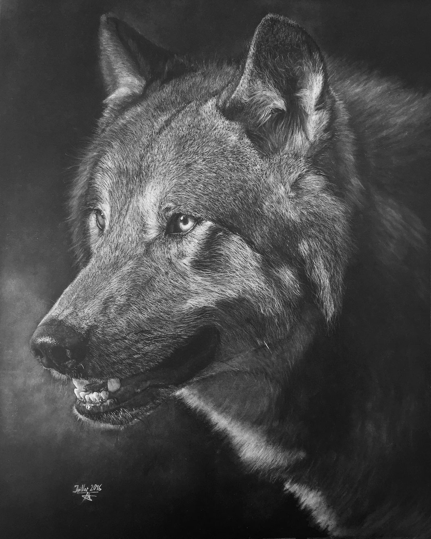 Regard de loup