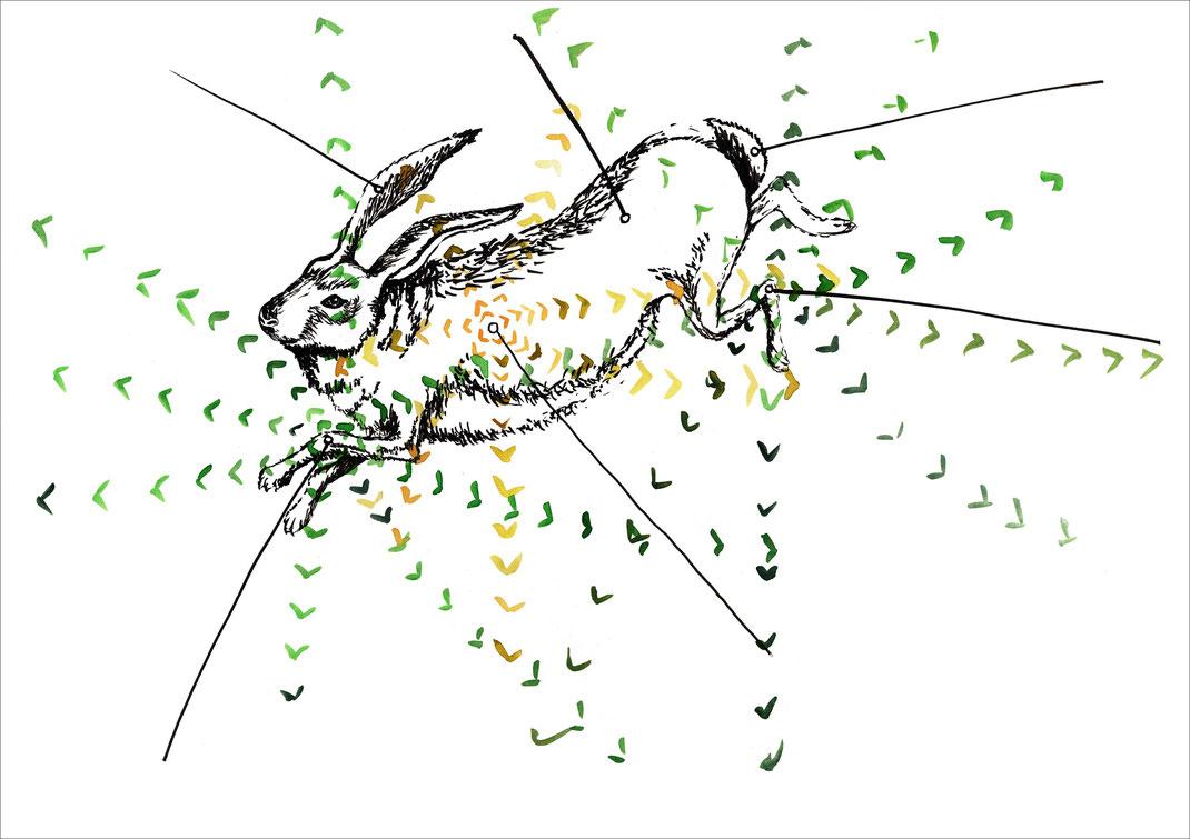 Hase, 2002, Tusche und Ecoline auf Papier, 59,4 x 42 cm