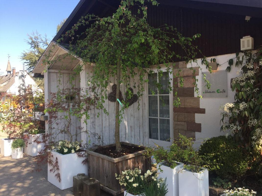 Eingang Blumencafe in Lehen