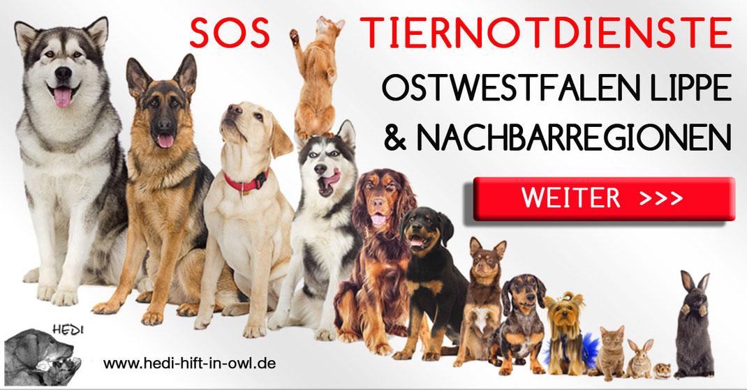 Tiernotdienste Ostwestfalen Lippe Tierklinik Bielefeld Tierklinken  Tierarzt Tierärzte Notdienst Tiernotfall Tieroperation Tierschutz Tierheime Tierpensionen Tierquälerei Tierschützer