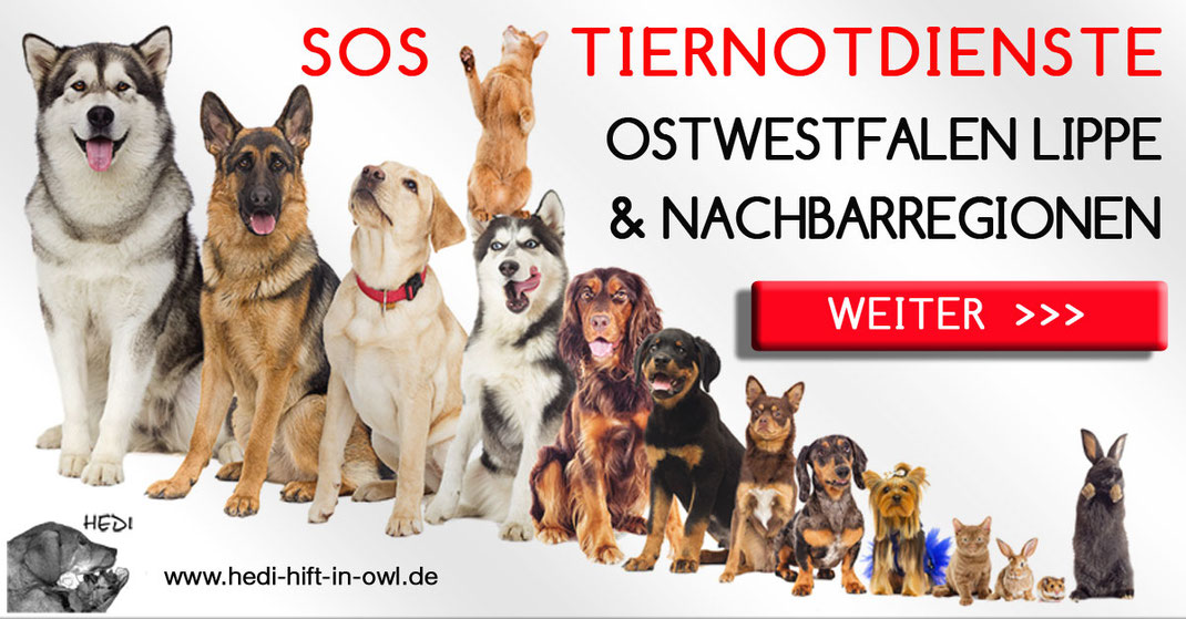 Tierklinik Bielefeld Tiernotdienste Ostwestfalen Lippe Tierklinken  Tierarzt Tierärzte Notdienst Tiernotfall Tieroperation Tierschutz Tierheime Tierpensionen Tierquälerei Tierschützer