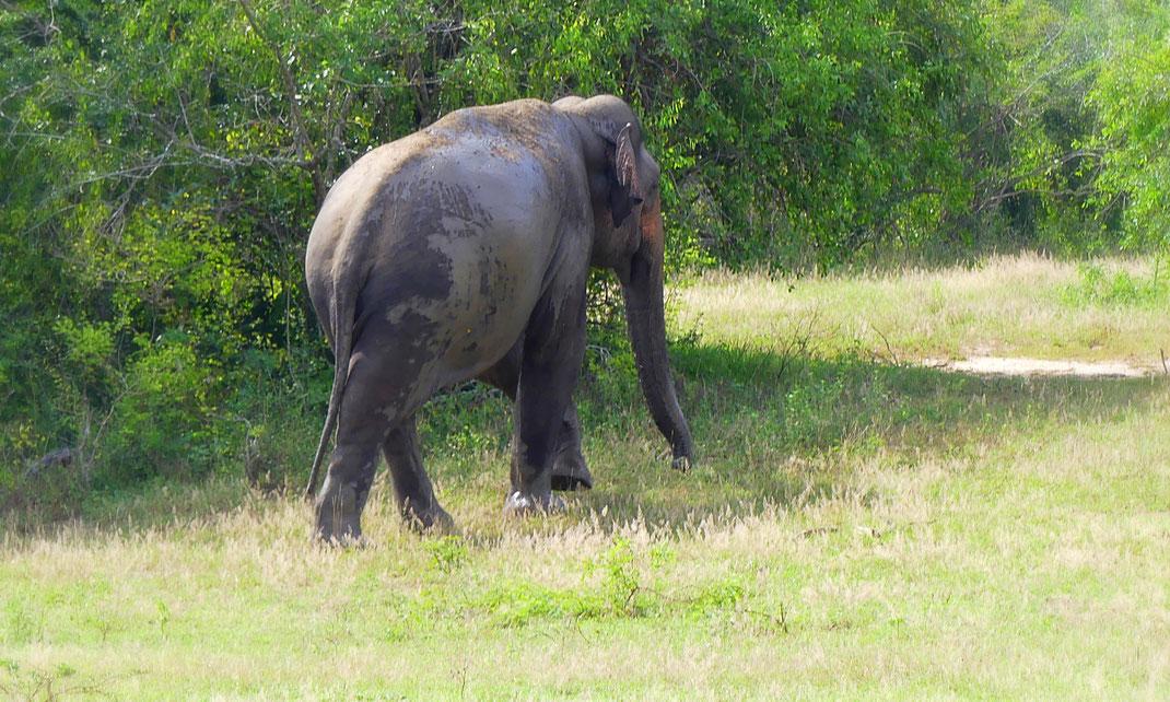 L'éléphant qui a presque défoncé notre Jeep. Un copain