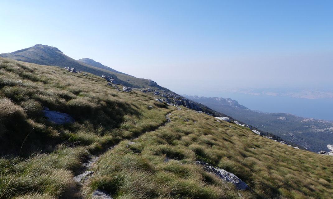 Premuzic Trail