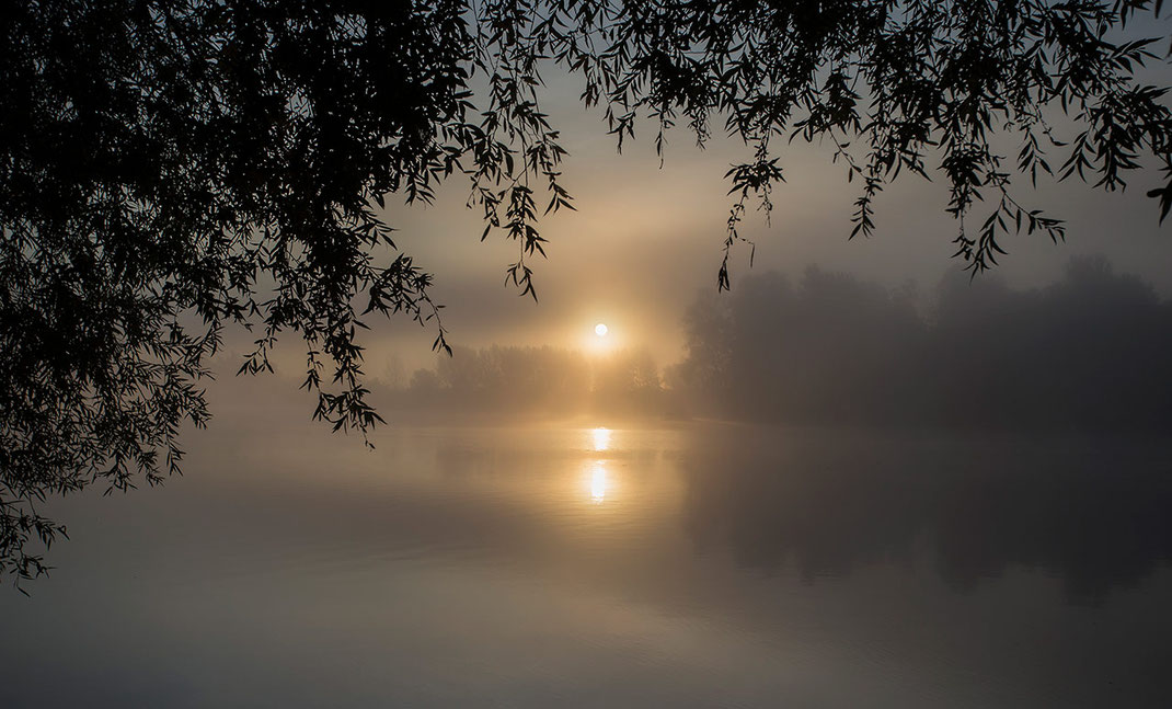 Mystic sunrise with morning fog surrounded by trees at a beautiful lake in Leeheim, Hessen, Germany