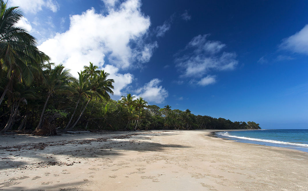 Cape Tribulation Beach with white sand and Rainforest near to Cairns, Queensland, Australia, 1280x796px