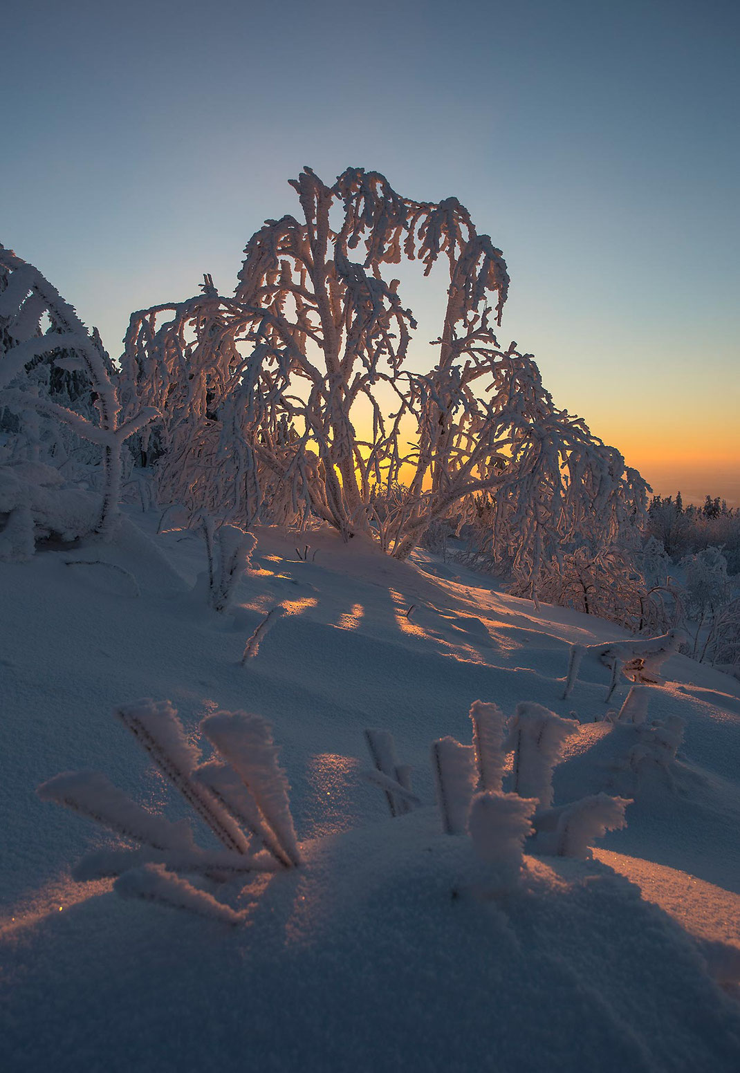 Orange sunset through frozen icy trees with beautiful snow crystals, Taunus mountains, Hessen, Germany