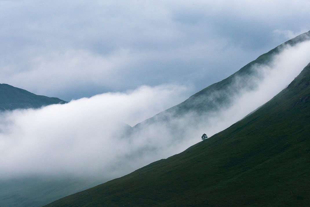Scotland Highlands green and misty mountains with clouds and fog and a solitaire tree, 1280x853px
