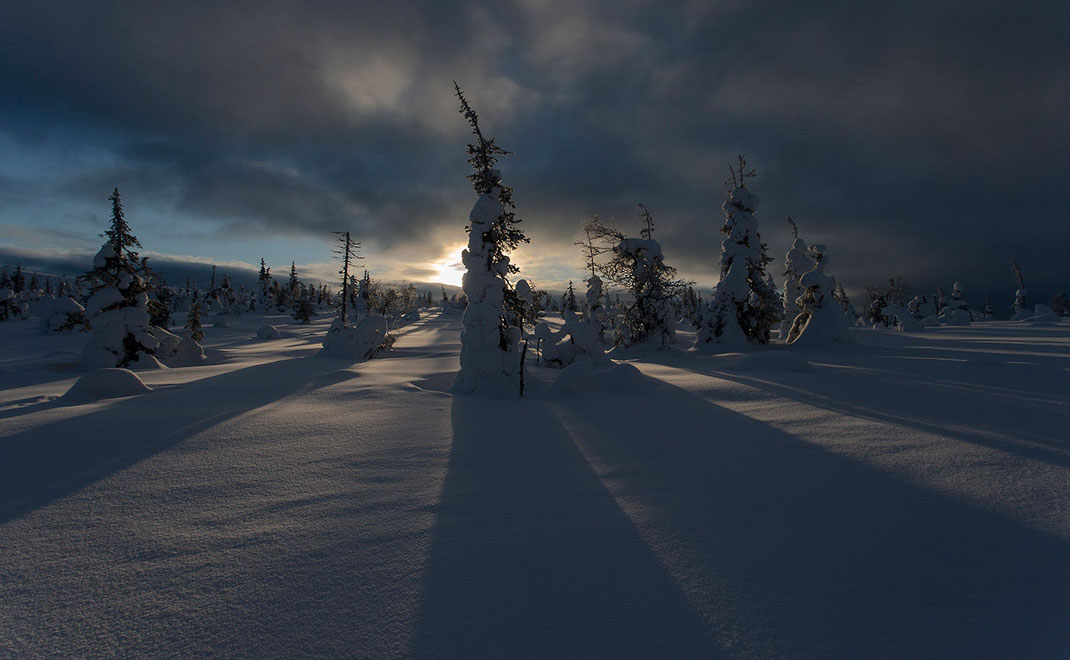Frozen Trees with long shadows against the setting sun in the Riisitunturin National Park, Posio, Lapland, Finland, Scandinavia