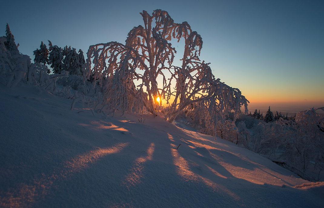 Sunset with frozen trees and deep snow, Grosser Feldberg, Taunus mountains, Hessen, Germany, Europe