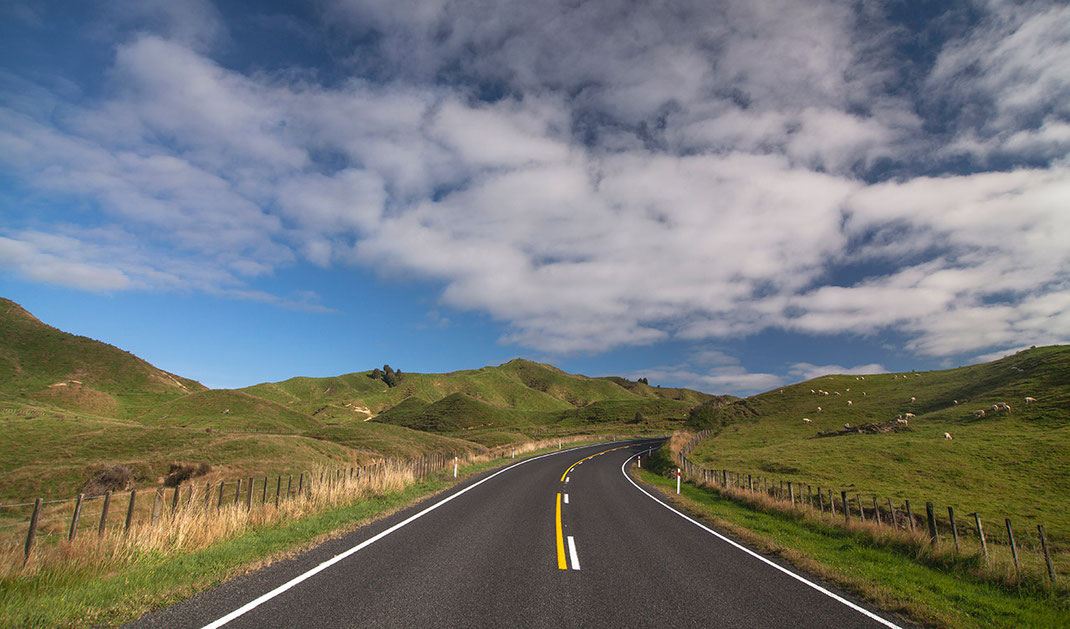 Winding Road in the Countryside with gras hills and sheep, Northern Island, New Zealand,  1280x752px